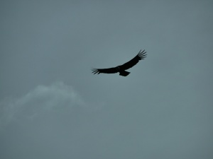 premier-condor